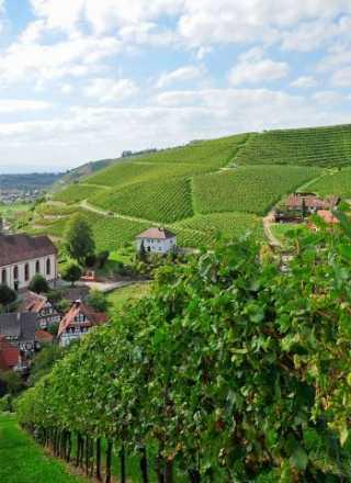 Baden wine meets Bayreuth